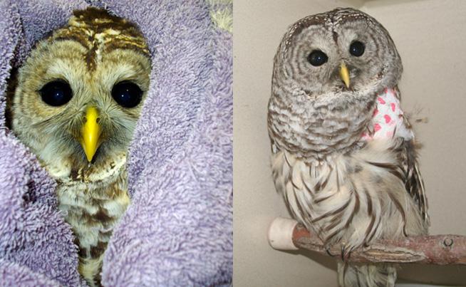 owls-slide