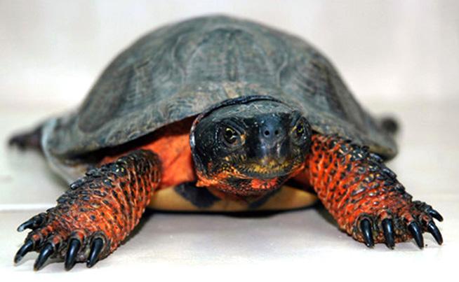 turtle-slide